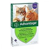 Bayer Vital GmbH Advantage 80 mg für gr.Katzen und gr.Zierkaninchen 4X0.8 ml
