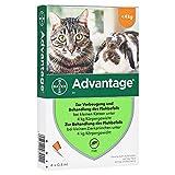 Advantage 40 mg für kl.Katzen und kl.Zierkaninchen 4X0.4 ml