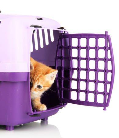 Transportbox für Katzen - Sicherer Transport Ihrer Katze
