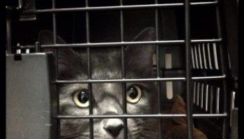 Flugreise mit der Katze – Tipps & Tricks