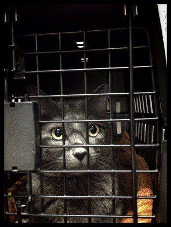 Flugreise mit der Katze - Foto: csp / 123RF Stockfoto