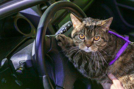 Katze im Auto transportieren - Bitte nur in speziell gesichertrer Katzenbox - Foto: otovlaskina / 123RF Stockfoto
