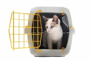 Katze an Transportbox gewöhnen