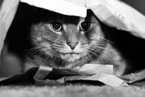 Umziehen mit Katzen - Tipps und Tricks