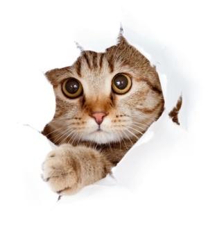 Verhalten der Katze führt zu vielen Missverständnissen
