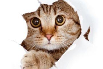 Das Verhalten der Katze