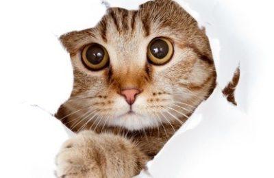 Verhalten der Katze