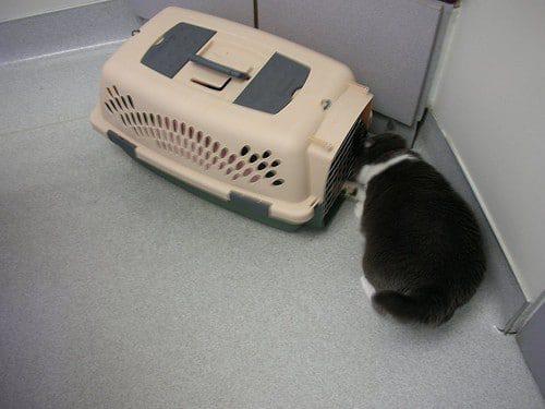 Katze in die Katzenbox locken