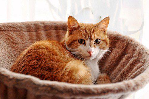 Katzenkorb mit Stoffüberzug