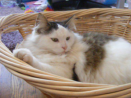 Weidenkörbchen für Katzen
