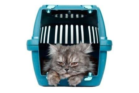 Transportbox Katze