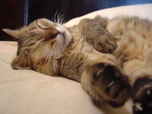 katze auf gemütlichen Katzenbett