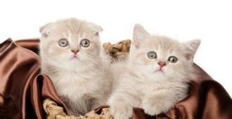 kuscheliges Katzenkörbchen