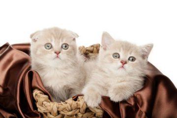 Das richtige Katzenkörbchen für die Katze mit Stil
