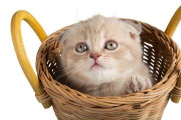 Wie gewöhne ich meine Katze an die Transportbox