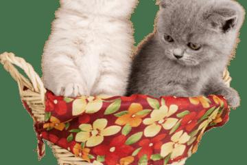 Wie groß soll ein Katzenkorb sein?
