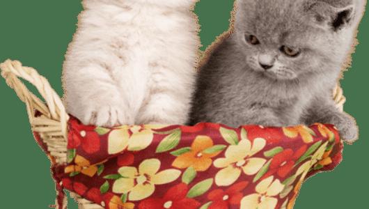 Lustiger kleiner Katzenkorb mit 2 kleinen Kätzchen