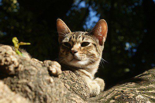 Genügend Pausen für die Katze auf einer langen Autofahrt