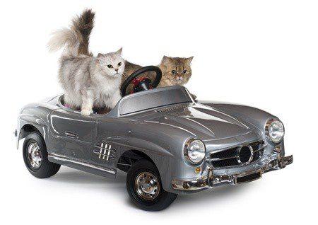 Wenn Katze eine Reise tut - Autofahrt mit der Katze