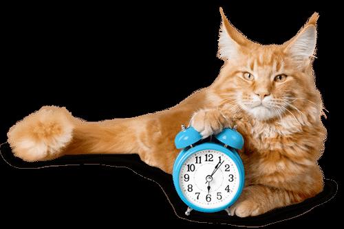 längere autofahrt mit der katze ohne stress
