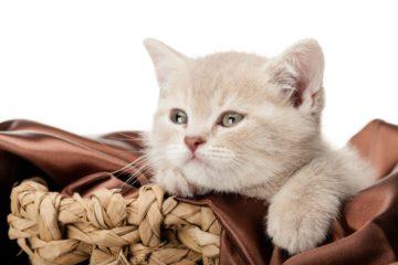 Mit der Katze unterwegs - Tipps für die passende Transportkiste