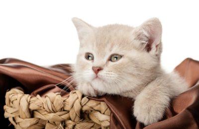 Katze-unterwegs