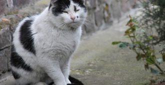 alte Katzen - artgerechte haltung