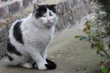 Katzen im hohen Alter – Tipps für eine artgerechte Haltung
