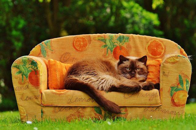 Wenn Haukatzen altern, werden sie meistens beqemer und schlafen mehr. (Foto: Alexas_Fotos /pixabay)