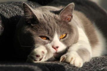 Katze alleine lassen – Sorgen Sie für Ihre Abwesenheit vor!