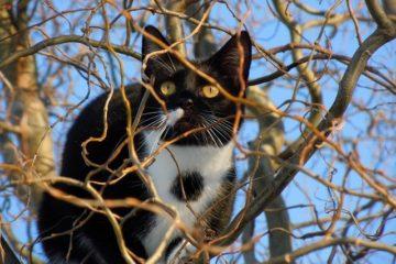 Katze entlaufen – Was tun?