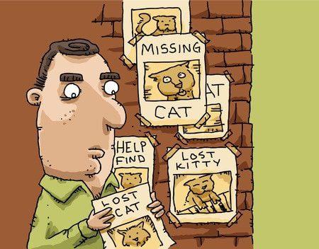 Katze oder Kater vermisst? Mit diesen Tipps finden Ihre entlaufene Katze wieder. Foto: blamb / 123RF