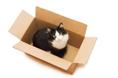 katzentransportbox aus karton basten pappkarton f r katzen. Black Bedroom Furniture Sets. Home Design Ideas