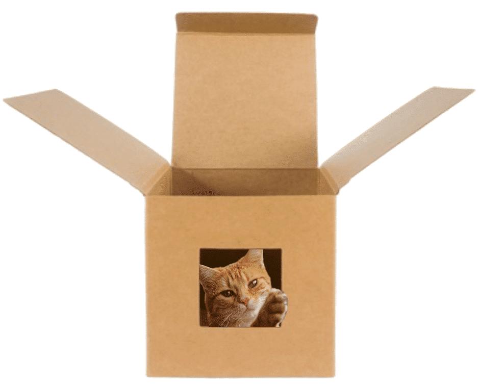 transportbox katze karton