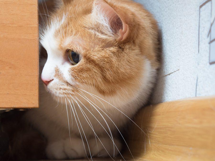 Katze hat sich versteckt