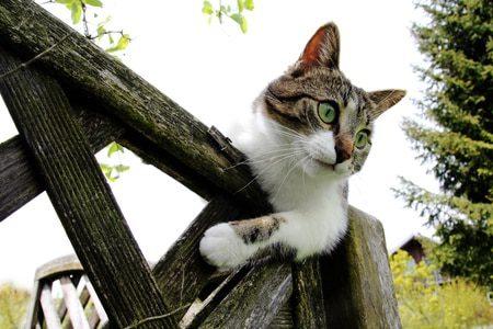 Ist Ihre Katze von der täglichen Erkundungstour noch nicht nach Hause gekommen? Sorgen sie sich nicht mehr! Mit GPS Trackern und anderen Haustierfindern wissen Sie immer wo sich ihr kleiner Streuner aufhält.