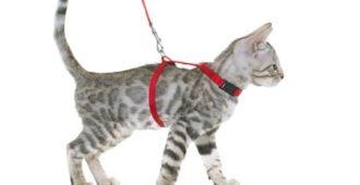 Katze an Katzenleine