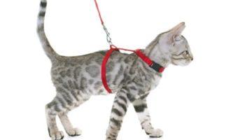 Katzenleine – Mit der Katze an der Leine