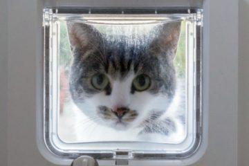 Katzenklappe mit Chip – Freier Eintritt mit Mikrochip