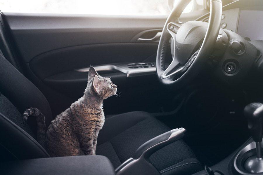 Katze im Atot transportieren