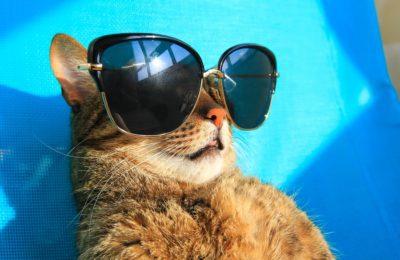 Katze mit in den Urlaub nehmen