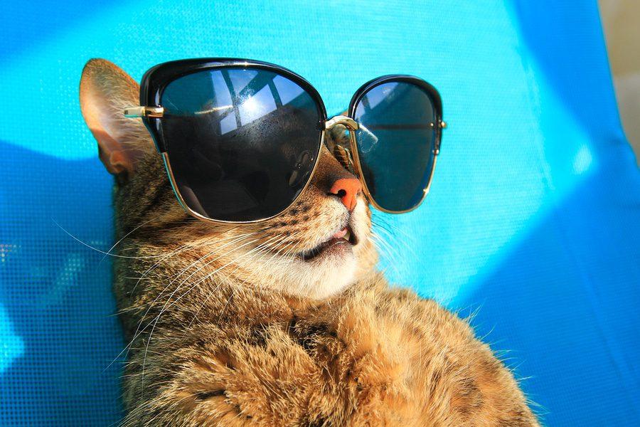 Urlaub mit der Katze