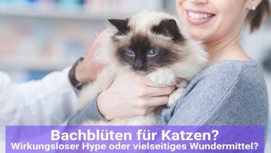 bachblueten-katzen