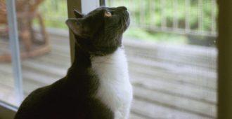 Fensterschutz für Katzen