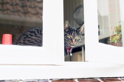 Fenstersicherung für Katzenn