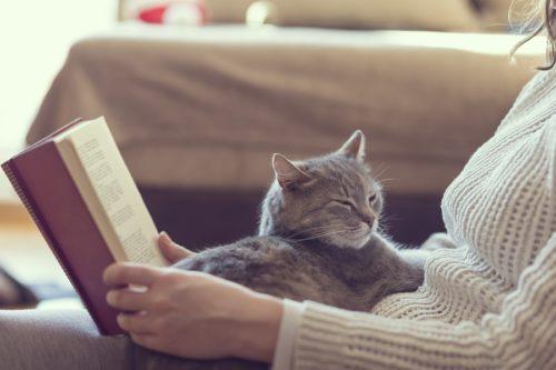 Wohlfühl Pheromone für Katzen