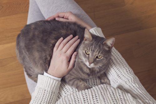 Katzenpheromone zur Beruhigung