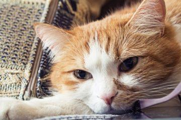 Katzentaubheit – Ist meine Katze taub?