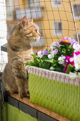 Katzenschutznetz & Katzennetze - Schutz für Balkon & Garten