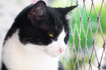 Katzenschutznetz – Sicherheit für Ihre Katze auf dem Balkon und im Garten